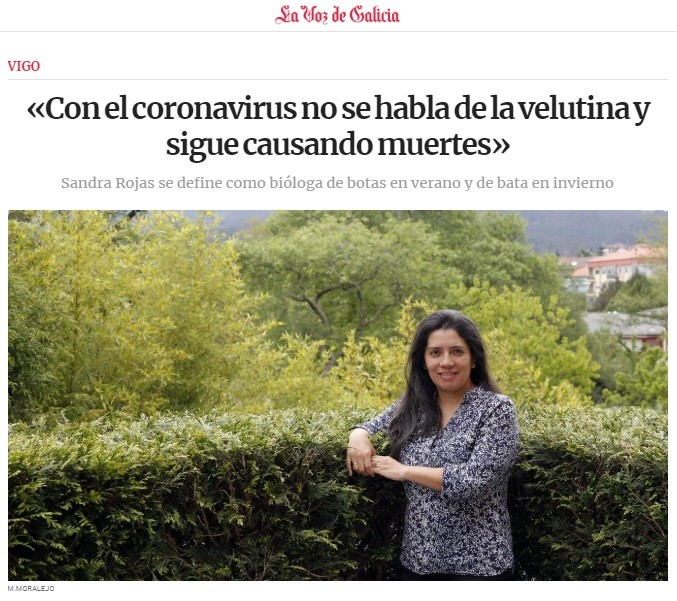 «With the coronavirus, velutina is not mentioned and continues to cause deaths»